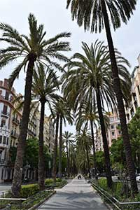 valencia-guide-palm-tree-promenade